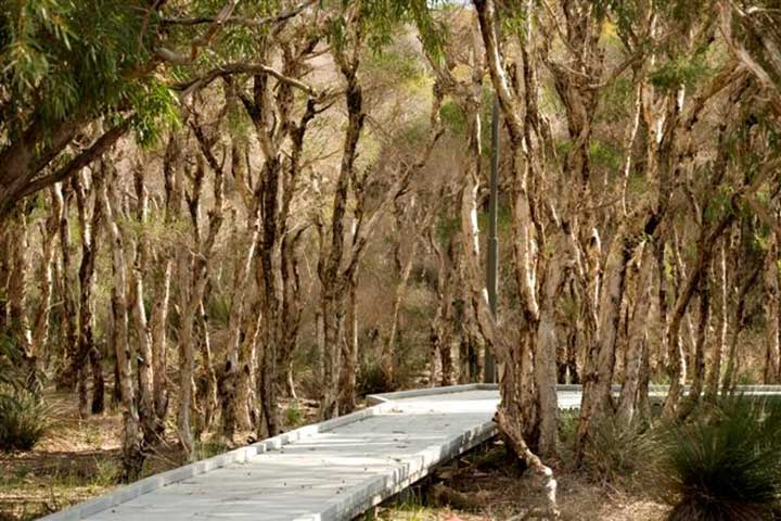 Seville Grove Boardwalk